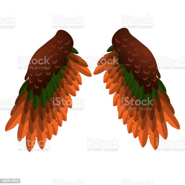 Two bird wings isolated on white background vector cartoon closeup vector id983619842?b=1&k=6&m=983619842&s=612x612&h= 7bj8xxwsfgpenyv8huelnj bxqzamvsycedpmrmqbo=