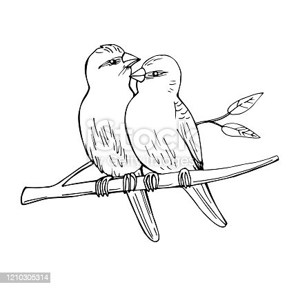 istock Two birds sitting on a branch. 1210305314