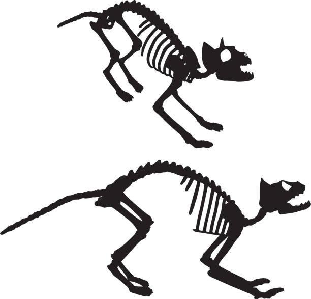 Two Black Cat Skeletons Vector illustration of two black cat skeletons. cat skeleton stock illustrations