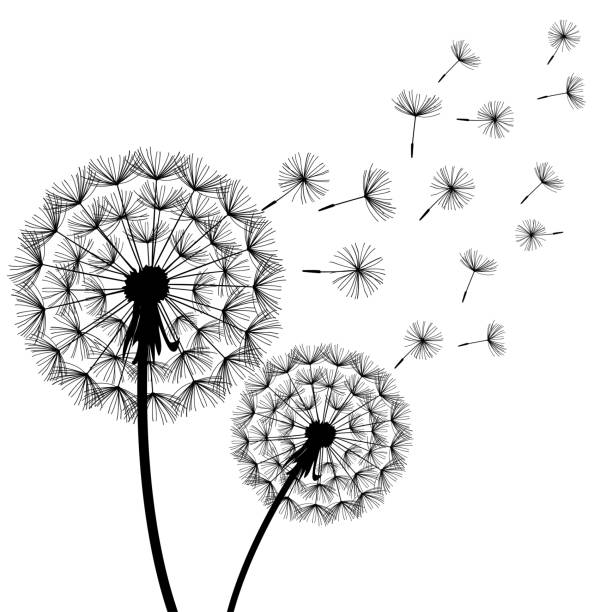 dandelions blowing the wind coloring pages | Royalty Free Drawing Of Dandelions Blowing In The Wind ...