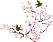 Two brown Sparrows Silhouette and Cherry Blossoms Branch