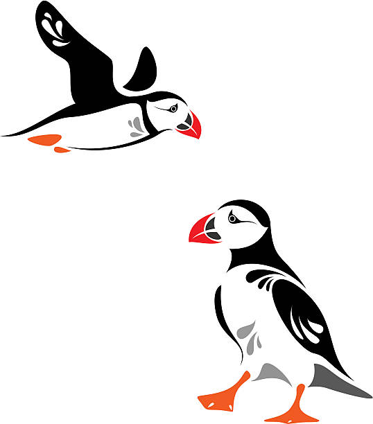 royalty free atlantic puffin clip art vector images