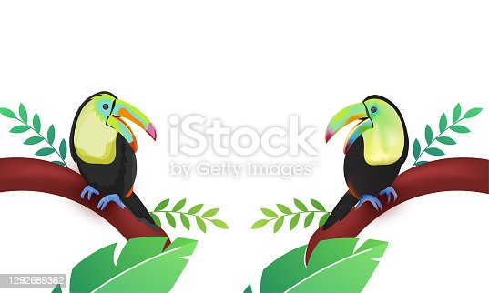 istock Two Cartoon Toucan Bird Sitting On Tree Branch Illustration. 1292689362