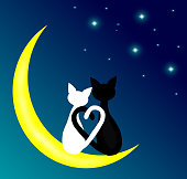 cat,animals,moon,dark,love.