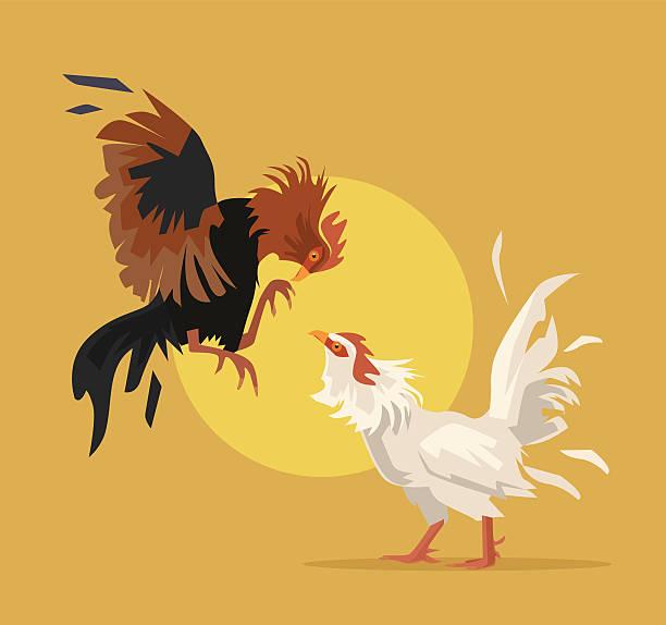 Two cocks fighting. Vector flat cartoon illustration Two cocks fighting. Vector flat cartoon illustration cockerel stock illustrations
