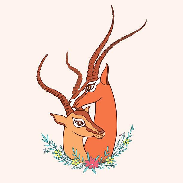 Gazelle vecteurs et illustrations libres de droits istock - Gazelle dessin ...