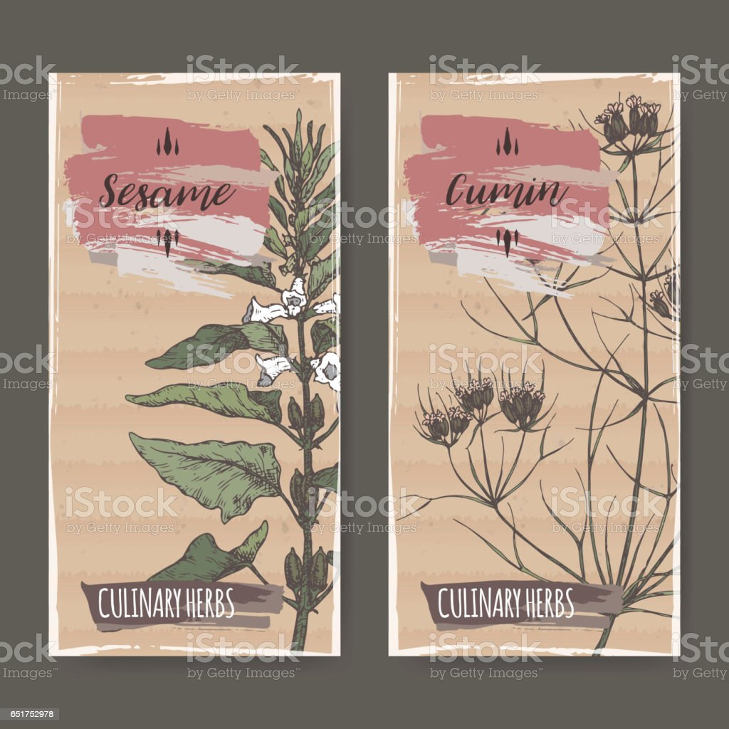 Two color labels with sesame and cumin sketch. vector art illustration