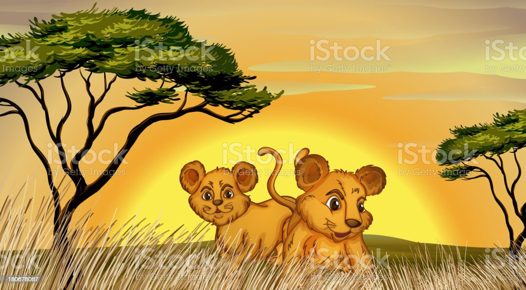 Two cubs royalty-free stock vector art