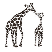 Two cute giraffes isolated on a white background. Baby giraffe and adult giraffe. Vector illustration