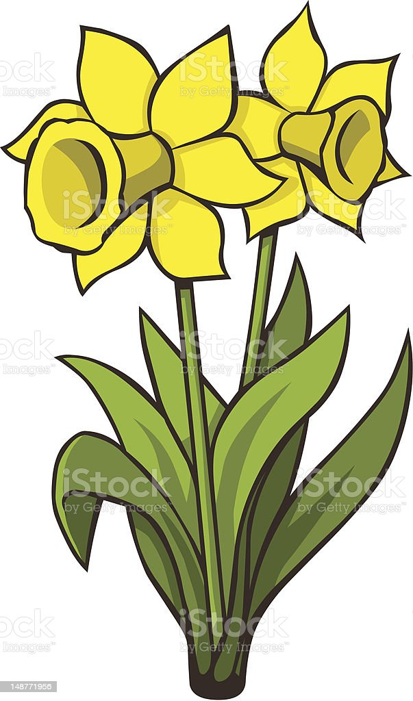 Two Daffodils royalty-free stock vector art