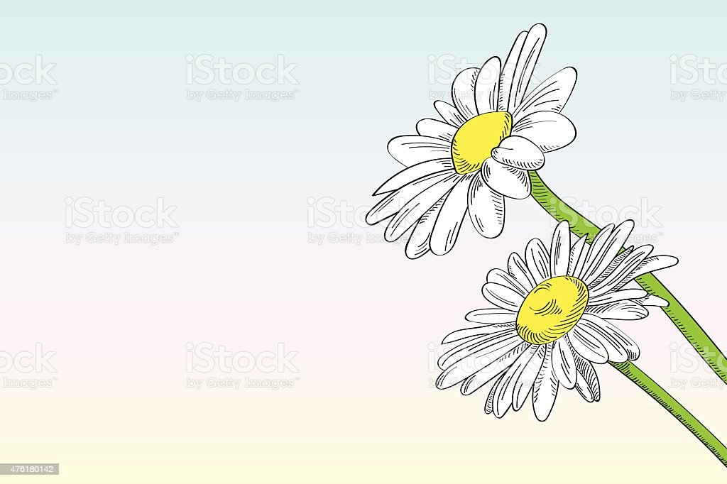 Two daisies against clear background vector art illustration