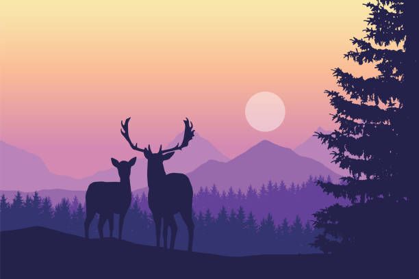 Two deer standing in coniferous forest under mountains and yellow purple sky - vector, with space for text Two deer standing in coniferous forest under mountains and yellow purple sky - vector, with space for text autumn silhouettes stock illustrations