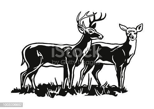 istock Two Deer 1003206652