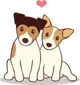 Male and female Jack Russell Terrier dogs sitting side by side