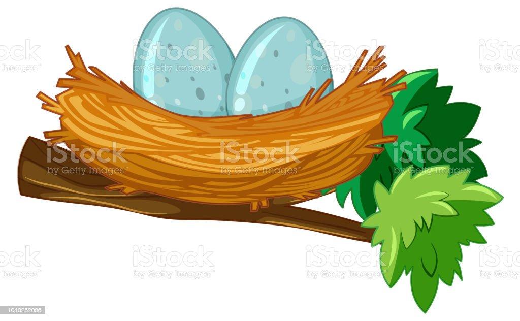 Two eggs in nest vector art illustration