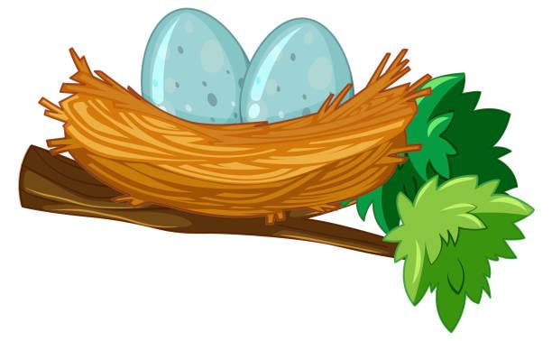bildbanksillustrationer, clip art samt tecknat material och ikoner med två ägg i boet - bo