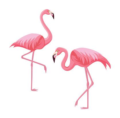 Two flamingos isolated on white background. Vector illustration.