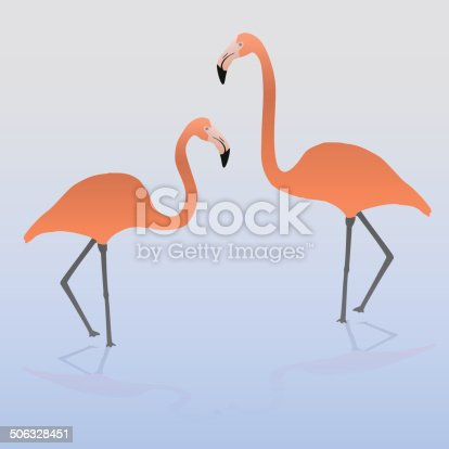 istock two flamingos on the water eps10 506328451