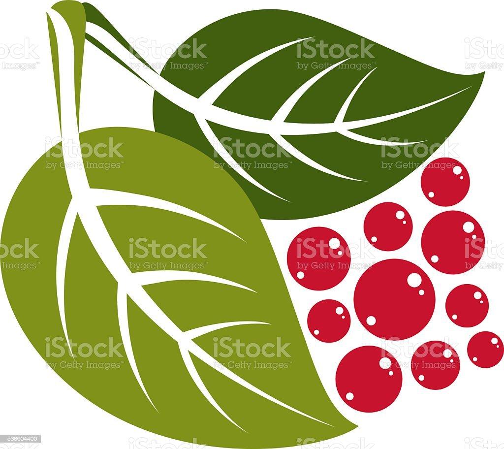 Pianta Ornamentale Con Bacche Rosse due ballerine verde vettoriale foglie di albero deciduo con bacche rosse -  immagini vettoriali stock e altre immagini di albero