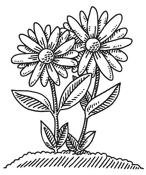 Two Flowers Growing Out Of Soil Drawing Hand-drawn vector drawing of Two Flowers Growing Out Of Soil. Black-and-White sketch on a transparent background (.eps-file). Included files are EPS (v10) and Hi-Res JPG. environment stock illustrations