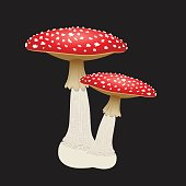 Two fly agaric mushrooms isolated on black background. Vector