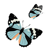 Two flying butterflies on a white background. Vector illustration of butterflies