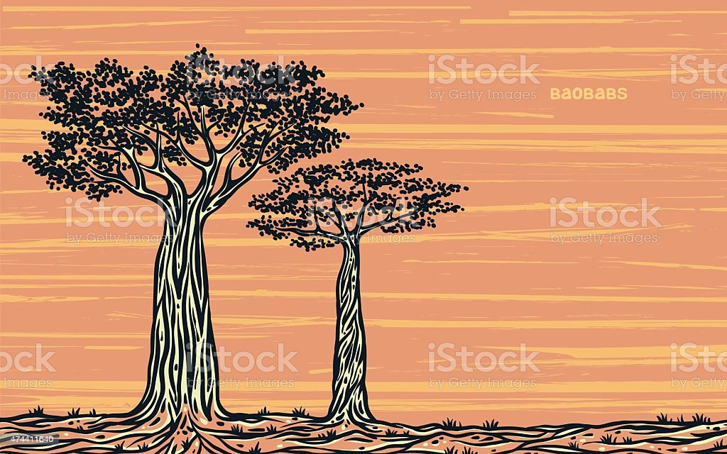 Two graphic baobabs. vector art illustration