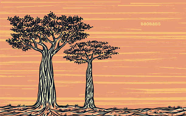 Dos baobabs gráfico. - ilustración de arte vectorial