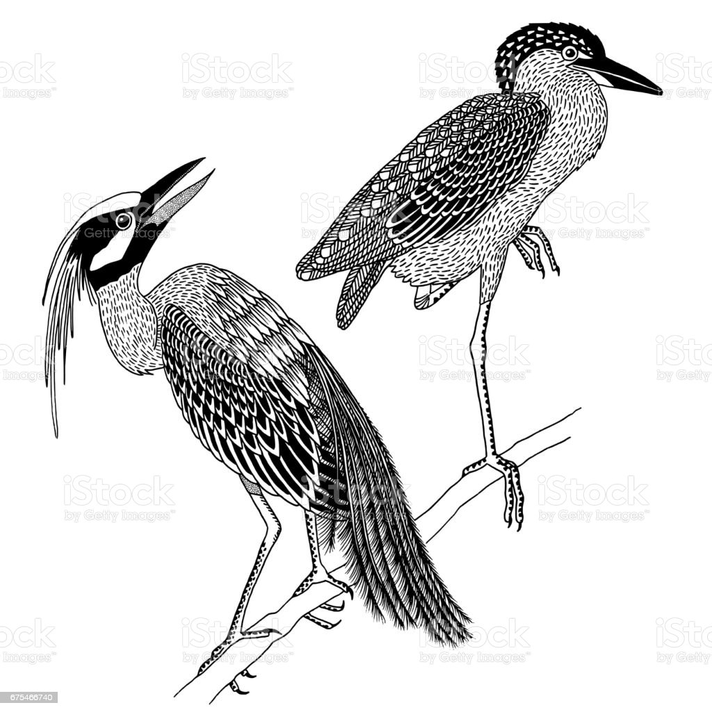 Two hand drawn heron birds royalty-free two hand drawn heron birds stock vector art & more images of animal