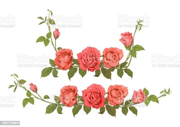 Two horizontal borders of roses panoramic view bouquets branches with vector id992729664?b=1&k=6&m=992729664&s=612x612&h= umtmxww37nfokax yzby1ynf9u6kirk5sk5skv5ipa=
