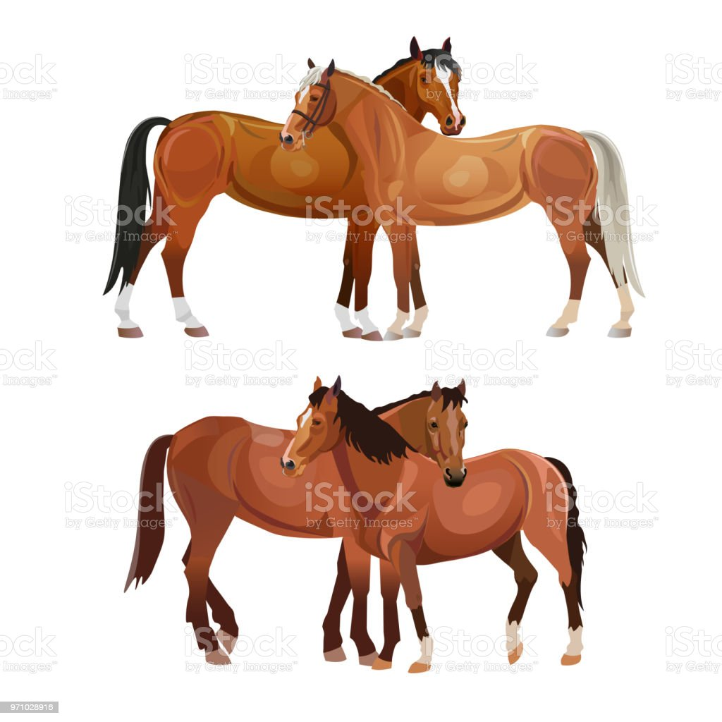 Two horses grooming each other vector art illustration