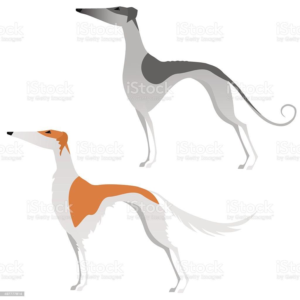 Two isolated elegant greyhounds vector art illustration