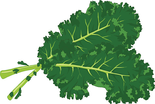 Two large kale leaves on a white background