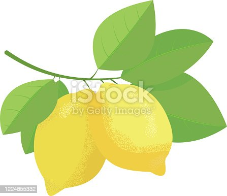 istock Two lemons on the branch with leaves 1224855332