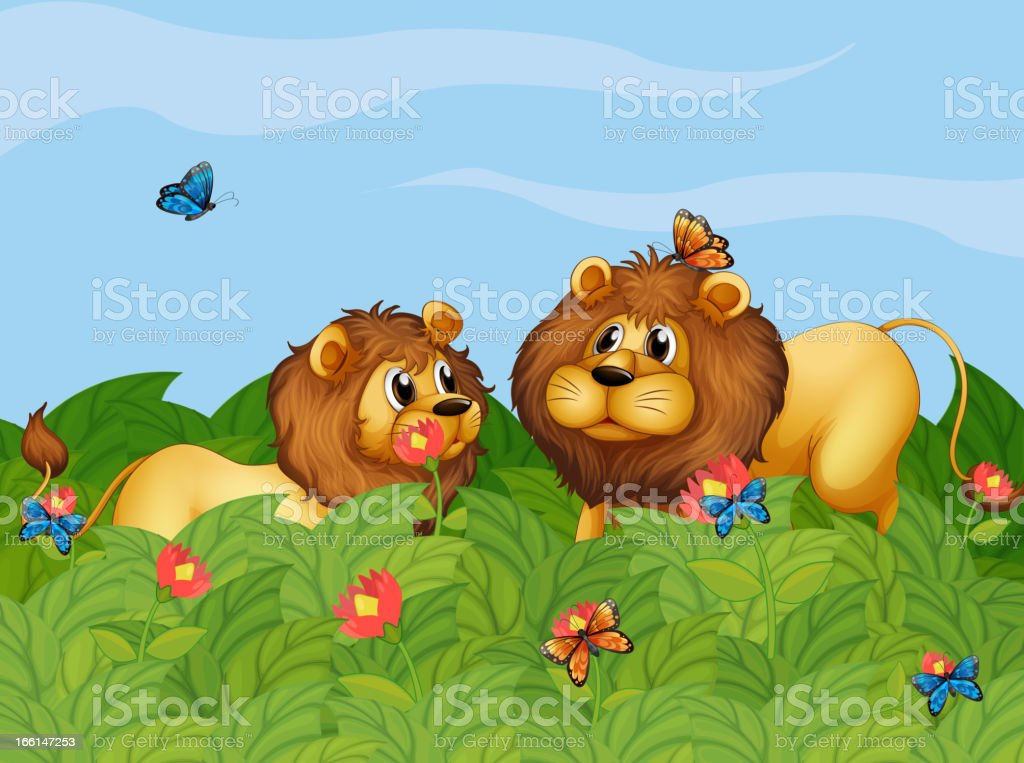 Two lions in the garden with butterflies royalty-free two lions in the garden with butterflies stock vector art & more images of animal