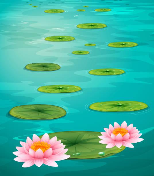 zwei lotusblüten und blätter auf dem wasser - seerosenteich stock-grafiken, -clipart, -cartoons und -symbole