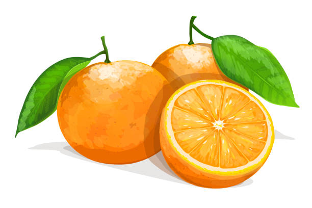 Bекторная иллюстрация Two oranges with slice isolated on white background. Vector illustration