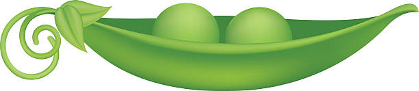 two peas in a pod - like two peas in a pod stock illustrations, clip art, cartoons, & icons