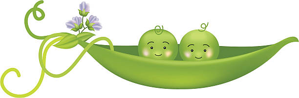 two peas in a pod vector illustration - like two peas in a pod stock illustrations, clip art, cartoons, & icons