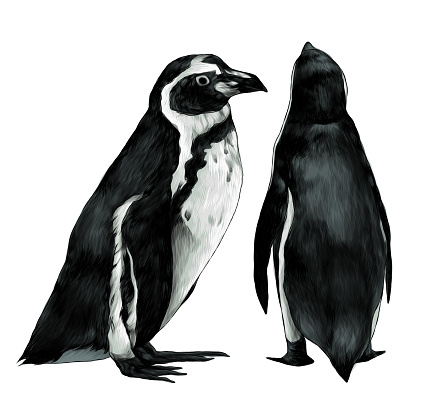 two penguins stand in full height one sideways second back