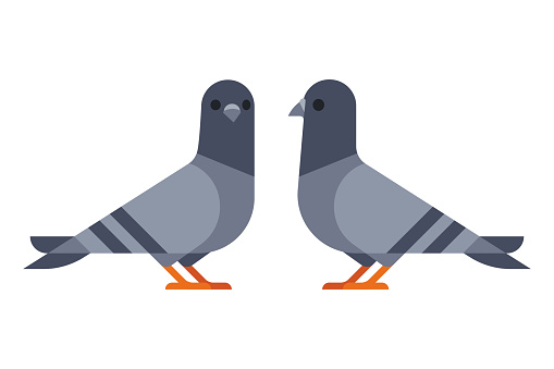 Two pigeons simple illustration