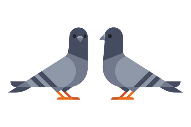 Two pigeons simple illustration Two cartoon pigeons in modern geometric flat design style. Isolated vector icon illustration. pigeon stock illustrations