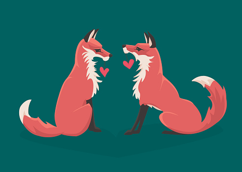 Two red foxes sharing Valentines.
