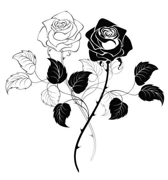 two roses - thorn stock illustrations