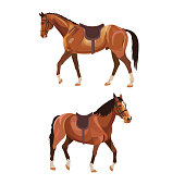 Two saddled horses,