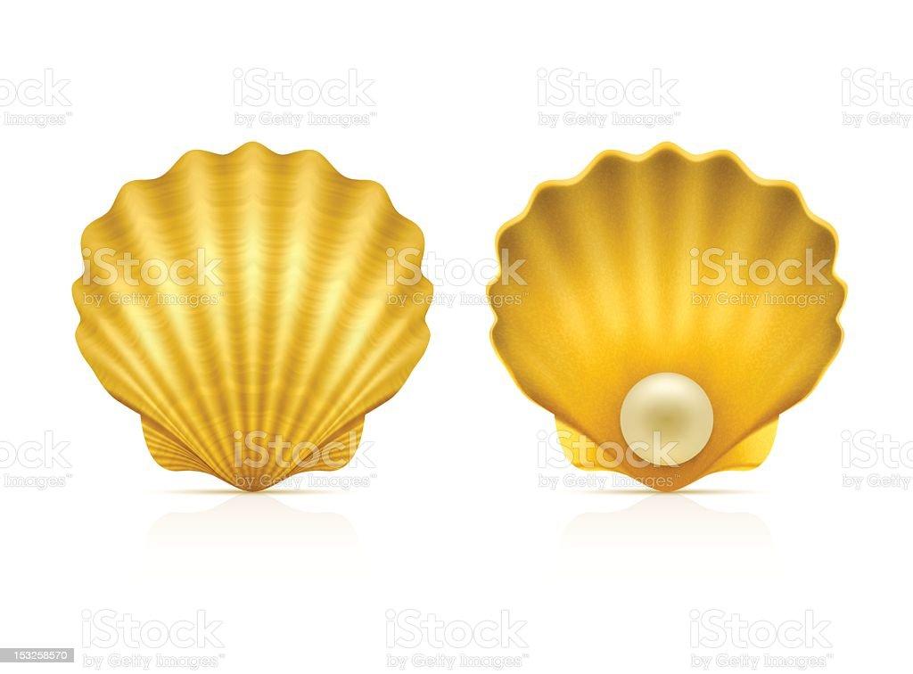 Two shells on white background vector art illustration