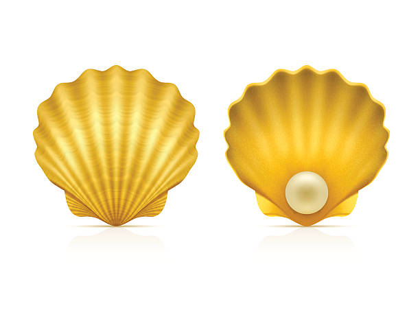 two shells on white background - scallop stock illustrations, clip art, cartoons, & icons