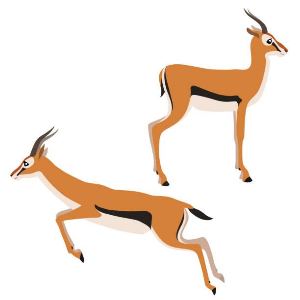 stockillustraties, clipart, cartoons en iconen met twee thomsons gazellen - antilope