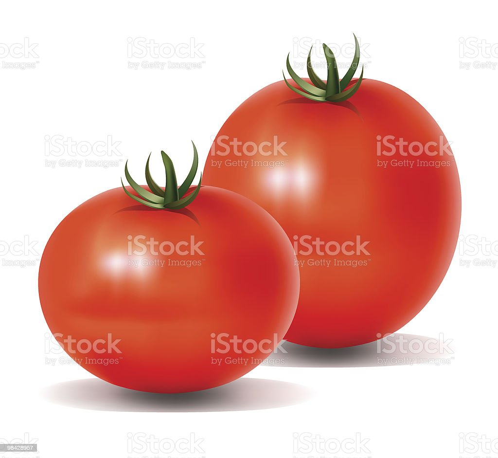 Two Tomatoes royalty-free two tomatoes stock vector art & more images of agriculture
