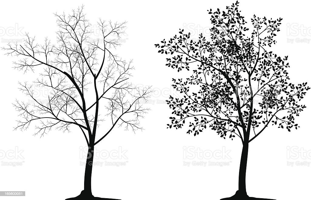 Two tree silhouettes in black on white background vector art illustration